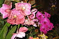 Budapest Orchid Exhibition 2006 13.JPG