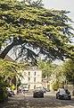 Bunn cypress.jpg