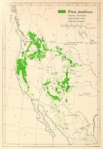 CL-47 Pinus ponderosa range map.png