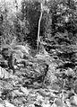 COLLECTIE TROPENMUSEUM Boomvarens in het bos op de vulkaan Tangkubanprahu TMnr 10027513.jpg