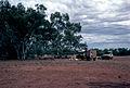 CSIRO ScienceImage 512 Eucalyptus Camaldulensis Seed Collection.jpg