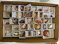 CUMNH Invertebrate Teaching Collections, box 5.jpg