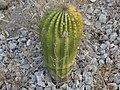 Cactus 14.jpg