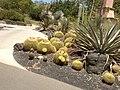 Cactus Arboretum.jpg