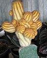 Cactus variety.jpg