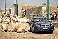 Camals market.jpg