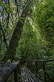 Camino entre bosque.jpg