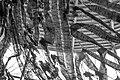 Camouflage (17425781256).jpg