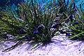 Capetown - Two Oceans Aquarium IMG 9450.JPG