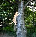 Cat climbing tree, Uchimaki Park.jpg