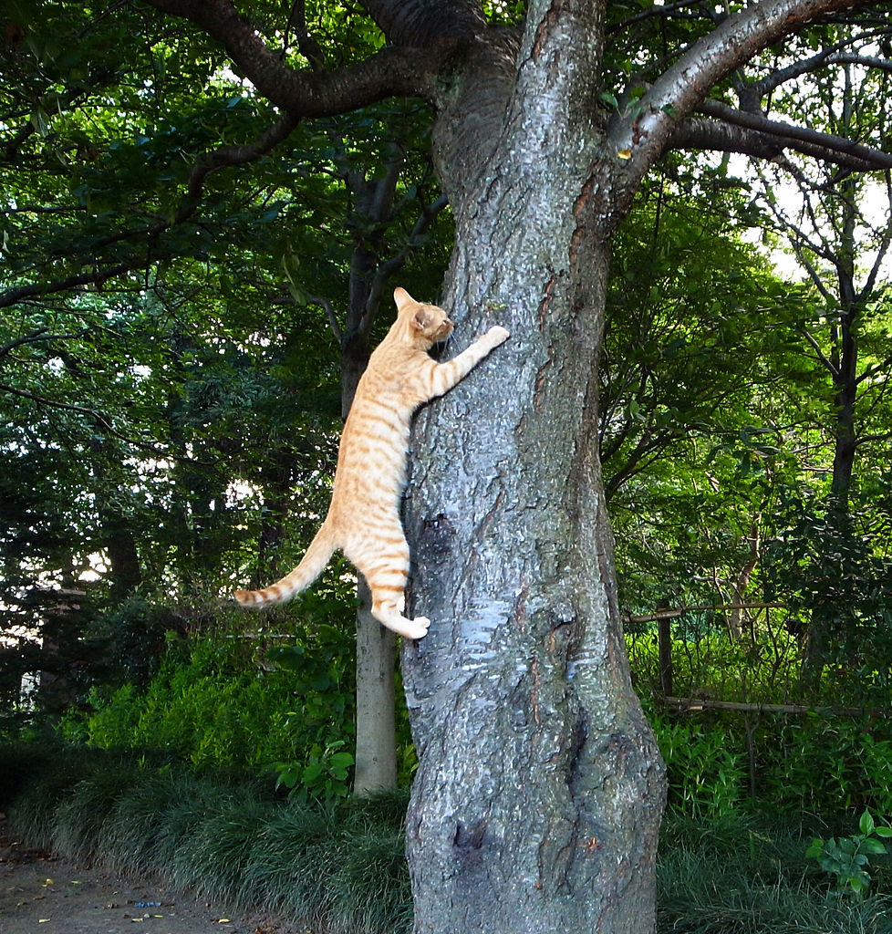 File Cat Climbing Tree Uchimaki Park Jpg Wikimedia Commons