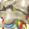 Cervical Spine - Atlas and Axis.png