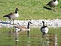 Chadwick Arboretum and Learning Gardens (38134486914).jpg