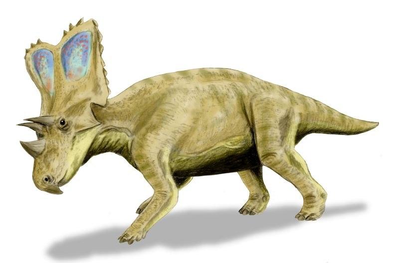 Chasmosaurus BW