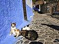 Chefchaouen cats.jpg