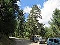 Chelela to Paro road views during LGFC - Bhutan 2019 (94).jpg