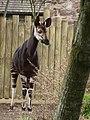 Chester Zoo (9487362952).jpg