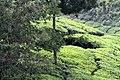 Chinnar Wildlife Sanctuary IMG 9072 (3).JPG