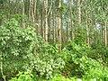 Cho Po Ro, Kra Buri District, Ranong 85110, Thailand - panoramio (8).jpg