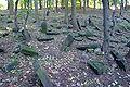 Cmentarz żydowski w Będzinie14.jpg