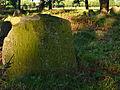 Cmentarz mahometański Studzianka 03 JoannaPyka.JPG