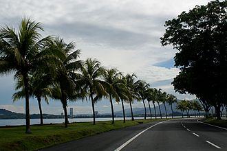 Kota Kinabalu - Coconut trees on the roadside, Kota Kinabalu has a tropical monsoon climate.