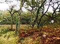 Coastal woodland - geograph.org.uk - 604653.jpg