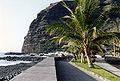 Cocos nucifera Palma.jpg