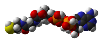 Coenzyme-A-3D-vdW.png