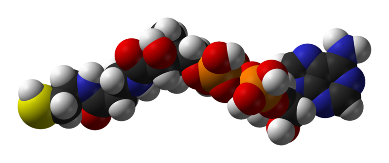 Файл:Coenzyme-A-3D-vdW.png