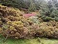 Colourful undergrowth in the forest - geograph.org.uk - 1445241.jpg