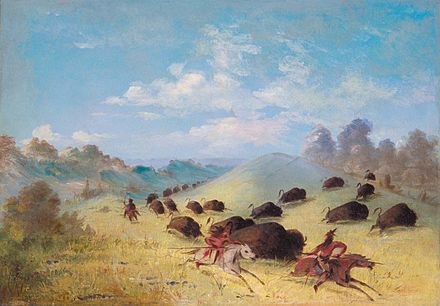 Comanches chasing bison, painted by George Catlin. The bison were the primary food source for the Comanche. Comanche Indians Chasing Buffalo with Lances and Bows.jpg