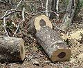 Combretum apiculatum, hout, Phakama, a.jpg