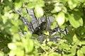 Common Cuckoo from Mordham Dam Nagpur JEG3651.jpg