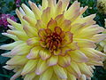 Concours International du Dahlia 2012 Parc Floral Paris 19.JPG