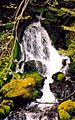 Constance Falls, Olympic National Park.jpg