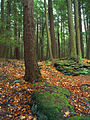 Cook Forest State Park Outcrops.jpg