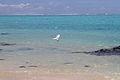 Cook Islands IMG 5349 (8453055246).jpg