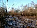 Coppiced area in Starvelarks Wood - geograph.org.uk - 114198.jpg