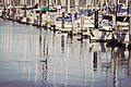 Cormorant, Pier 39, San Francisco (2569470083).jpg