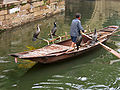 Cormorant fishing -Suzhou -China-6July2005-2.jpg