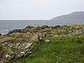 Cormorants on south coast of Sanda Island - geograph.org.uk - 538240.jpg