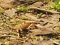 Crayfish P4140085.jpg