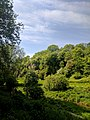 Creswell Gorge, Creswell Craggs, Notts (62).jpg