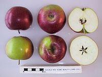 Cross section of Double Red Rome Beauty, National Fruit Collection (acc. 1950-131).jpg
