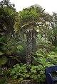 Cycad in Tresco Abbey Gardens - geograph.org.uk - 1715760.jpg