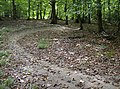 Cycle track in Busgrove Wood - geograph.org.uk - 594854.jpg