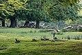 Dülmen, Wildpark, Kanadagänse -- 2021 -- 9072.jpg