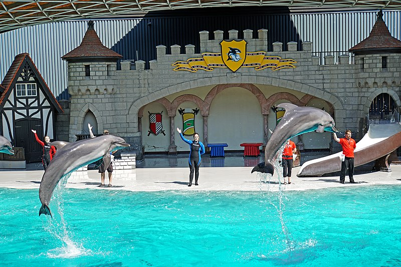 File:DSC09274 - Dolphin Show (36825263220).jpg