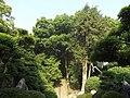 Daikouzi 06.jpg